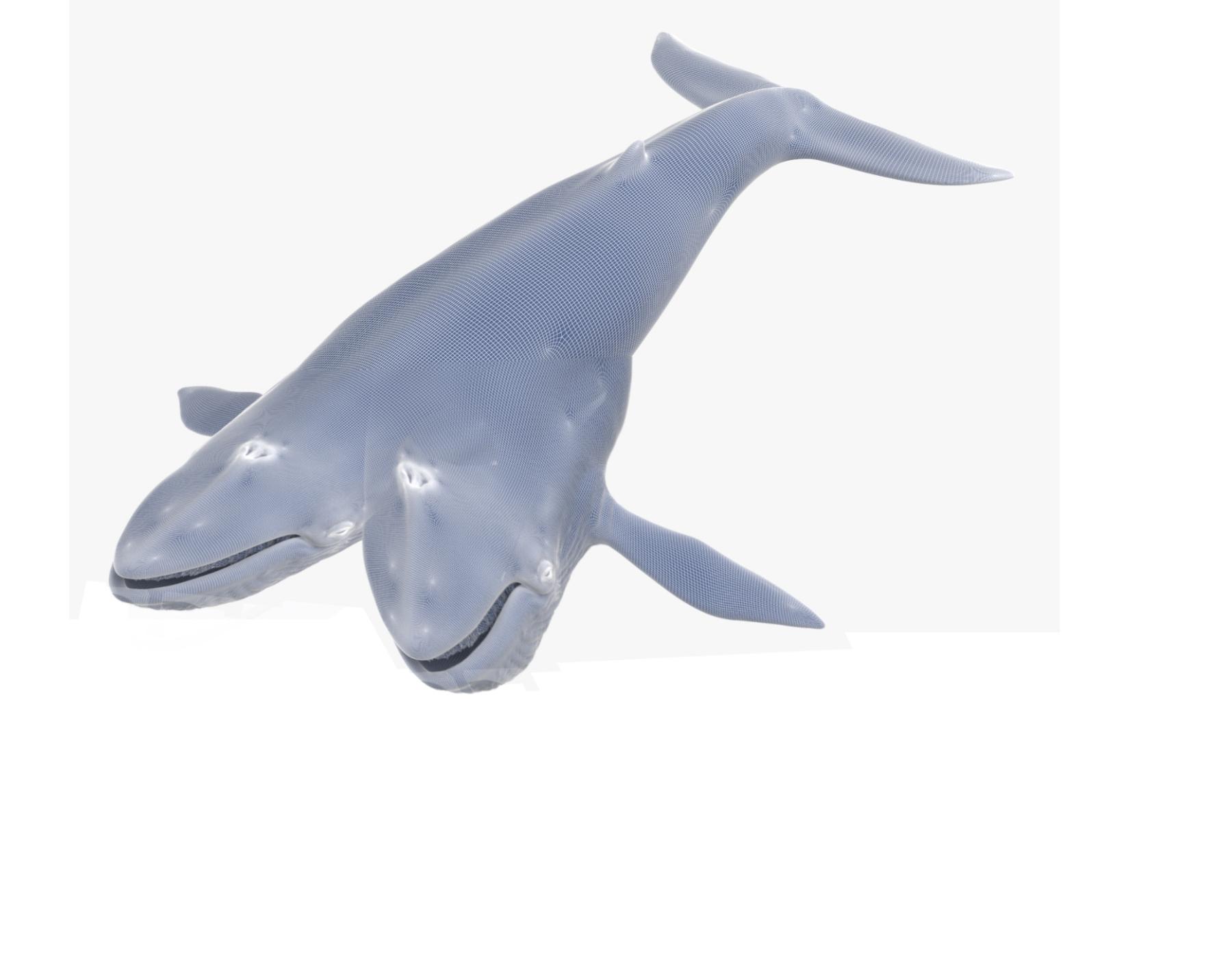 1.-baleia-bicefala-1